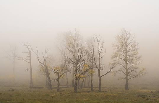 Scott Wheeler - Apparitions