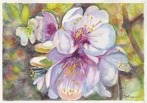 Apple Blossom Aquarelle by Dai Wynn
