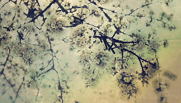 Apple blossom by AugenWerk Susann Serfezi
