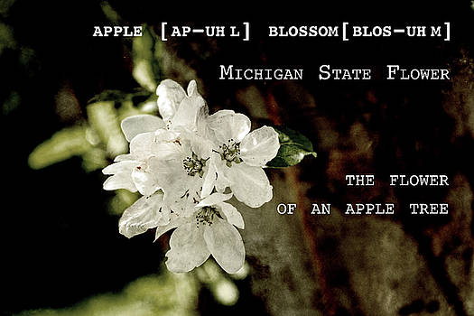 Sharon Popek - Apple Blossom by Definition Michigan