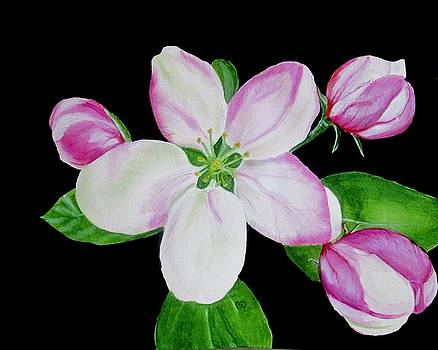Apple Blossom by Carol Blackhurst