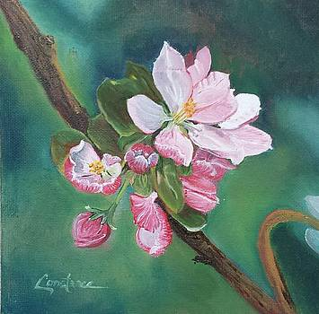 Apple Blossom by Connie Rowsell