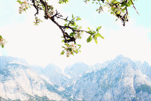 Apple Blossoms and Mountains by Brooke T Ryan