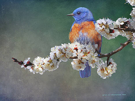 Apple Blossoms Bluebird by R christopher Vest
