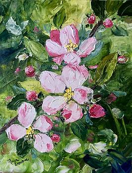 Apple Blossoms  by Monica Ironside
