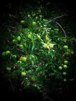 Apple Bouquet by Joyce Kimble Smith