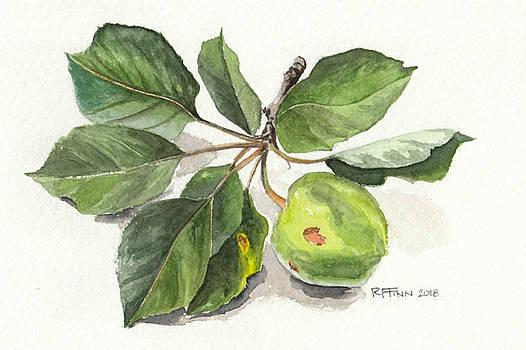 Apple Branch by Rowena Finn