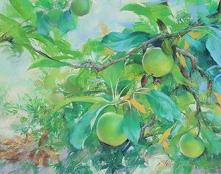 Apple Branches by Kelly Lanning Phipps