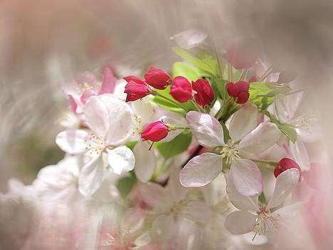 Apple Buds by Evelyn Tambour