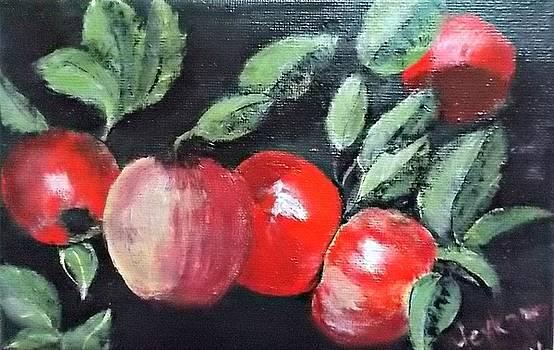 Apple bunch by Francine Heykoop