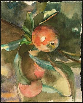 Apple by E E Scanlon