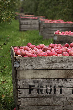 Apple Harvest by Kelly Lucero