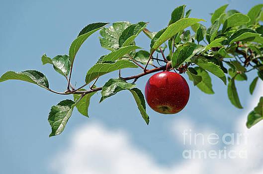 Paul Mashburn - Apple In A Tree