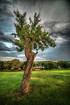 Apple Tree, Hillcrest Park by Jakub Sisak