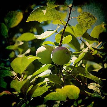 Milena Ilieva - Apple Tree