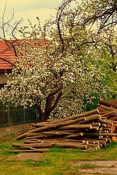 Henryk Gorecki - Apple-tree-Spring