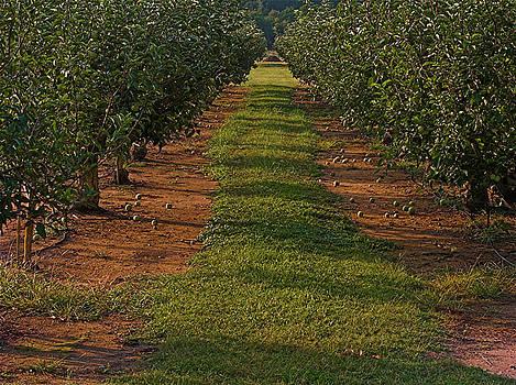 Karen Musick - Apples For Sale