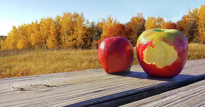 Apples on a Hayride by Lynn Hansen