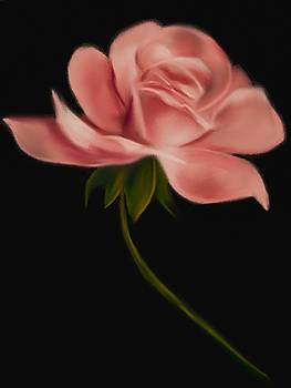 Apricot Beauty Rose by Michele Koutris