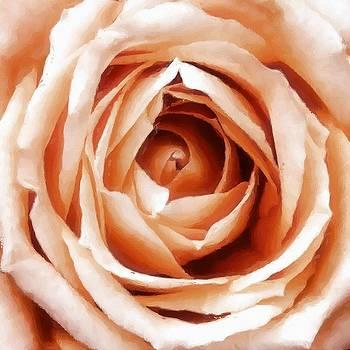 Patricia Strand - Apricot Rose