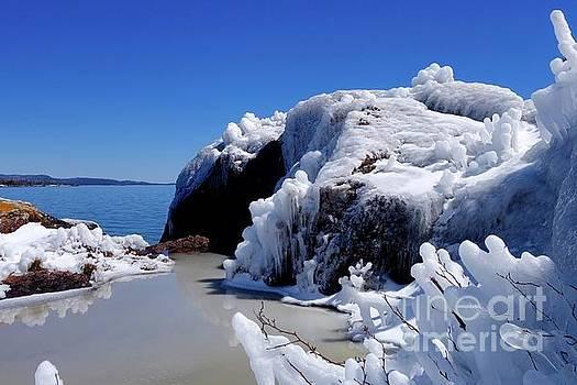 April Ice Storm Treasures by Sandra Updyke
