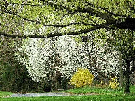 April in Virginia by Joyce Kimble Smith