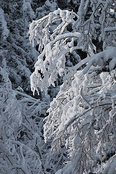 April Snow by Ron Cline