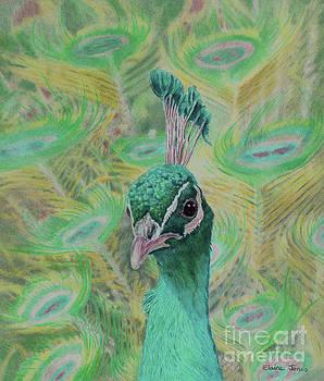 Aqua Peacock by Elaine Jones