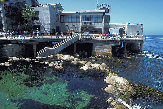Aquarium at Monterey in California by Carl Purcell