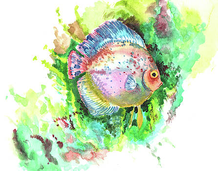 Aquarium Fish, Discus by Suren Nersisyan