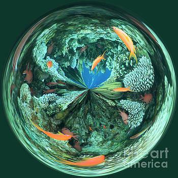 Aquarium by George Cathcart
