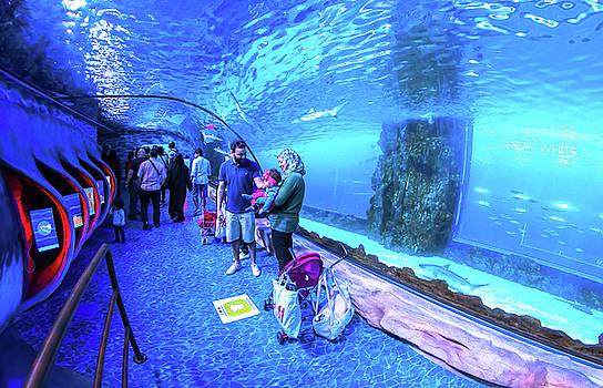Aquarium Mall by Ehab Amin