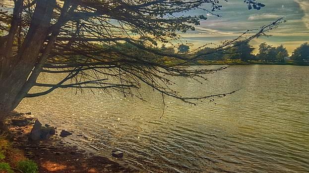 Aquatic Dusk by Philip Hennen