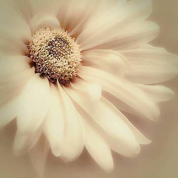 Arabesque in Butternut by Darlene Kwiatkowski