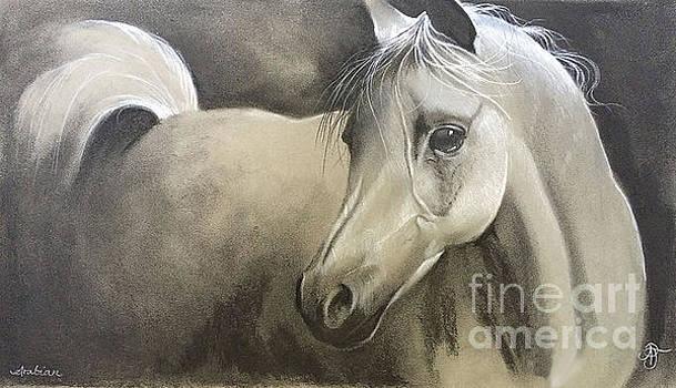 Arabian  by Ashley Jennings