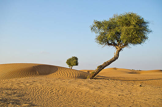 Arabian desert by Victoria Savostianova