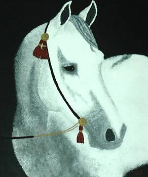 Arabian Grey by Alynne Landers