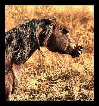 Arabian Horse Anger by Stacy Swenson