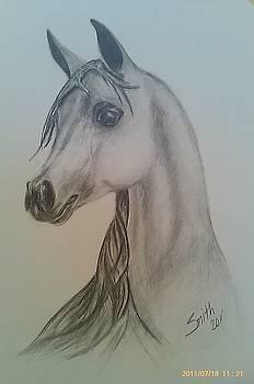 Arabian Horse by Heidi Smith