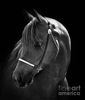Sandra Huston - Arabian Horse in Black and White