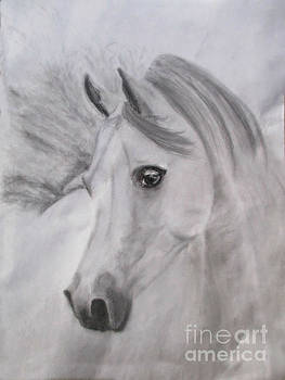 Arabian Horse by Vicki Wilcox