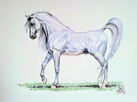 Arabian Stallion  by Cheryl Poland
