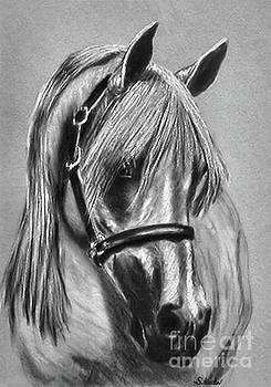 Sandra  Huston - Arabian