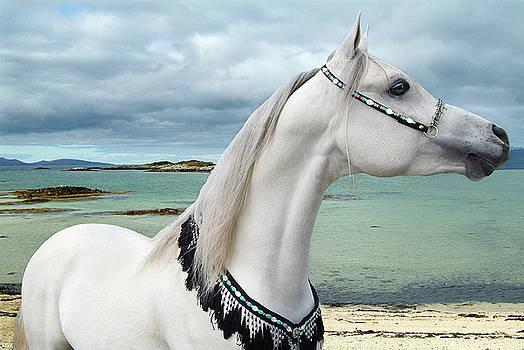 Arabian Sea by Maggie Dee