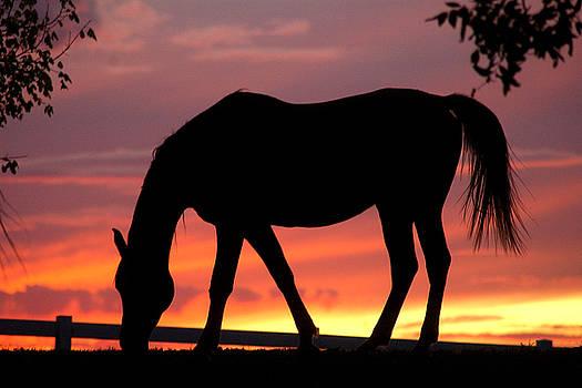 Robert Anschutz - Arabian Sunset