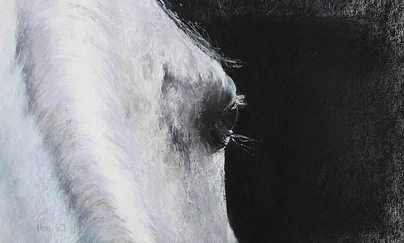 Arabian Thoughts by Sabina Haas