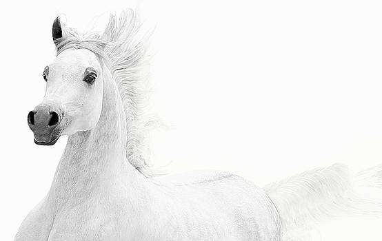 Arabian White on White by Veronica Ventress