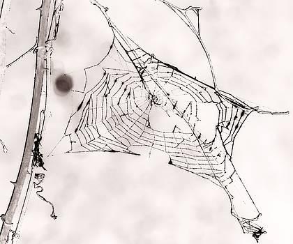 Arachne's Domain by Phil Penne