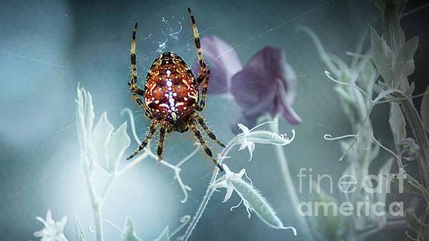 Araneus Spider with Flowers by Eva-Maria Di Bella