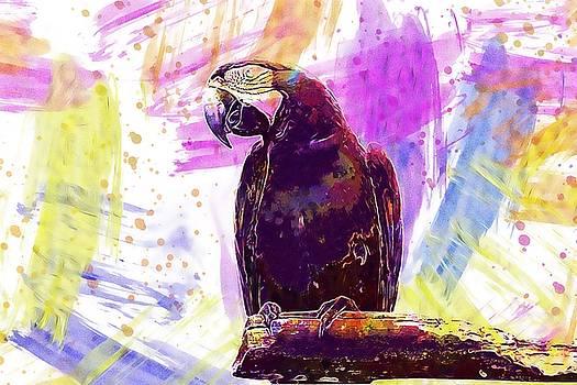 Arara On White Background Bird  by PixBreak Art